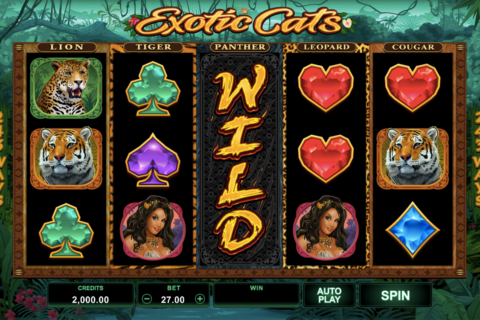 eotic cats microgaming pacanele