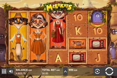 meet the meerkats push gaming pacanele